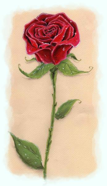 Rosa de la bella y la bestia