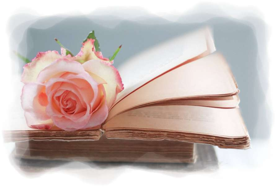 7. libros y rosa
