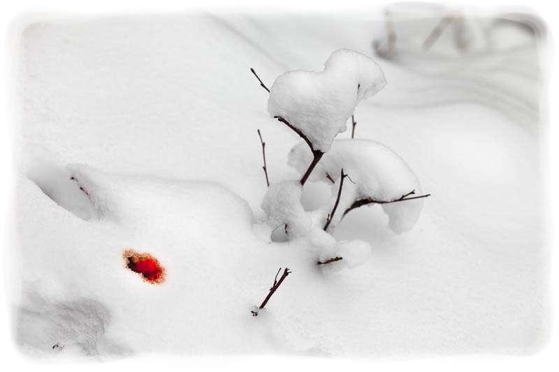 Blanco, rojo, negro